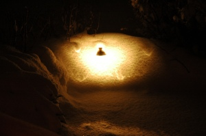 Colorado Outdoor Lighting Path Light
