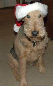 Cody - Santa Claus